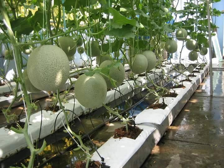 Image result for grow bag túi trồng cây
